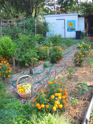 Prior Unity Garden
