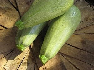 Light Green Lebanese Summer Squash from Bountiful Gardens