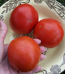 Thessaloniki Tomato, great for drought and a good all around open pollinated red tomato