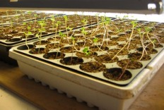 grow food from seed