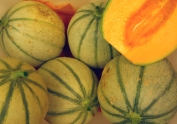 growing french melons