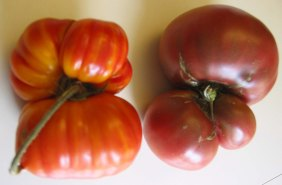 Funky heirloom tomatoes