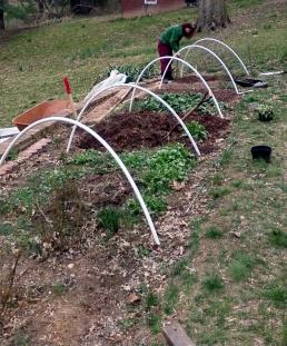Tending hoop house plantings