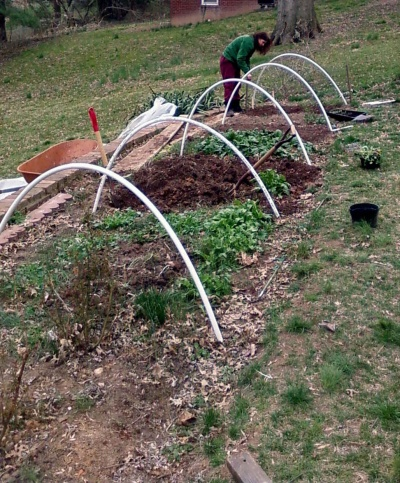 Tending hoop house plantings