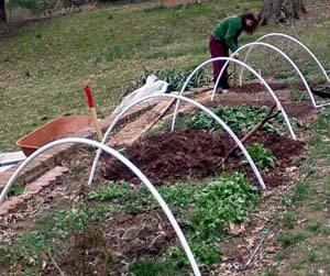 prepairing the fall hoop house