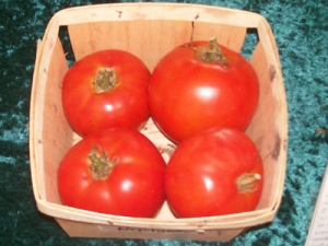 Neptune Red Tomato