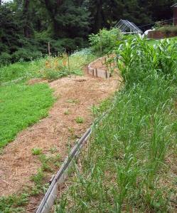 Garden beds on contour