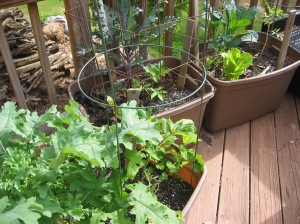 Grow lots of food in a container