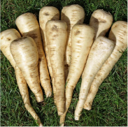 parsnip photo