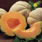 hearts of gold melon