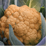 organe burst cauliflower