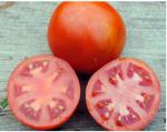 old virginia tomato