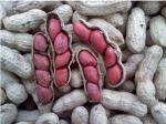 tenn red valencia peanuts