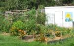 learn garden layout