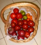 Basket of home grown tomatoes