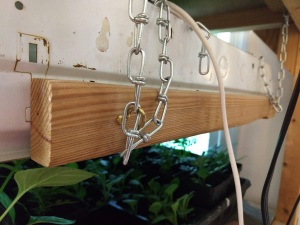 seed rack height