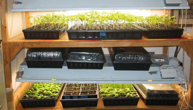 how to start seedlings