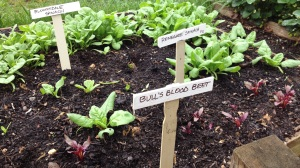 Spinach and beets are great spring companion plants
