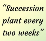Succession plant every two weeks for extended harvest
