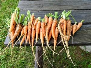 ya ya carrots